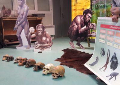 l'évolution des 1ers hominidés
